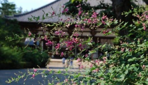 【奈良】唐招提寺は萩の名所!国宝や重要文化財を背景に写真撮影