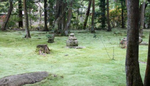 秋篠寺は森に囲まれた苔寺!苔庭(緑の絨毯)は季節や天気で表情を変える