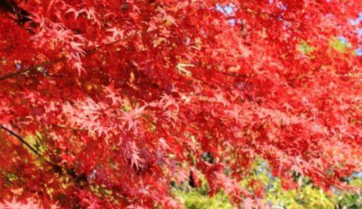 円成寺の紅葉は11月中旬が見頃!名勝庭園の池に映るモミジは必見