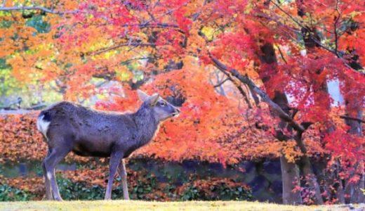 奈良公園で紅葉と鹿がコラボ!写真を撮影できるスポットを紹介