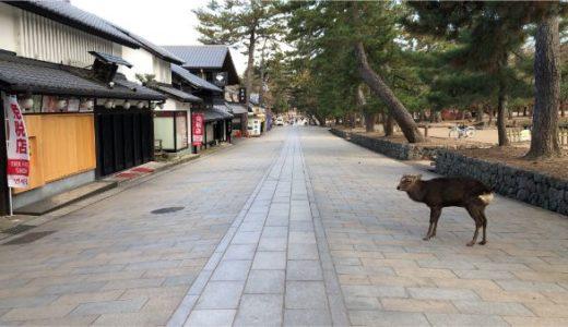 早朝の奈良公園を散歩!人がいない東大寺で鹿活して朝ごはん