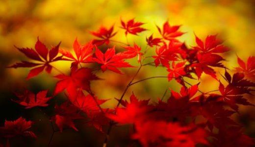秋篠寺の秋の見どころ!紅葉する木は少ないけど楽しみ方はある