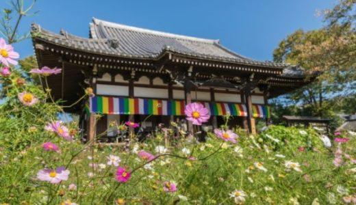 奈良のコスモス寺は般若寺!見頃は年で変わるので開花情報は要確認
