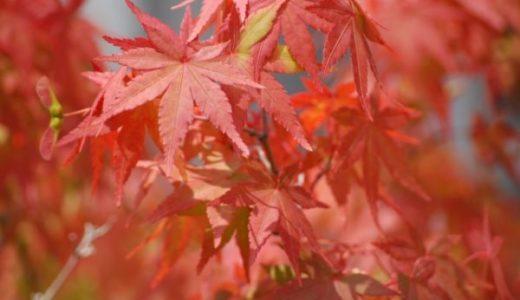 【奈良県の紅葉】おすすめスポットと見頃!名所や穴場と見どころも紹介
