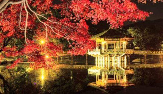 奈良公園の紅葉ライトアップ時間!注意点と夜の写真を綺麗に撮るコツ