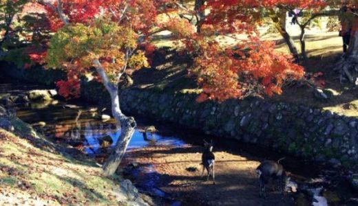 奈良公園の紅葉!おすすめ3コースを紹介